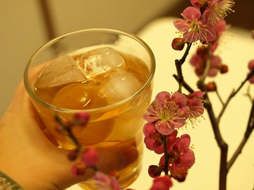 梅と梅酒 (51)
