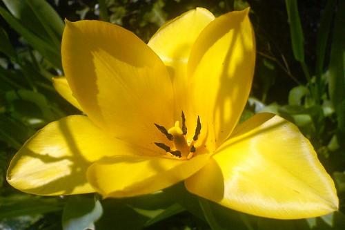 Attimi gialli