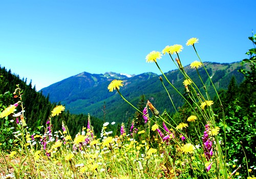 flowers wild mountain green beautiful landscape washington pretty view pacificnorthwest sight wilderness