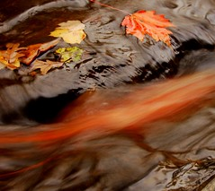 As Fall Drifts By