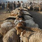 Kashgar Animal Market: Sheep - China