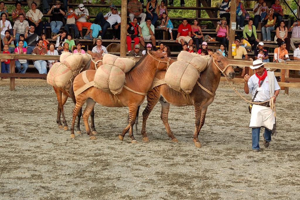 Imagen de un Espectáculo en Panaca, Quindio con mulas cargadas
