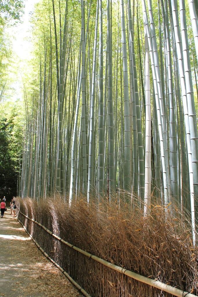 Arashiyama – Bambusskov (1)