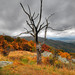 Dead but Alive - Shenandoah National Park