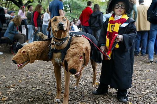 Disfraz de Harry Potter con el perro Fluffy