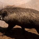 San Diego Zoo 013