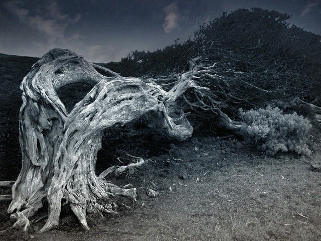 30 самых жутких деревьев на Земле