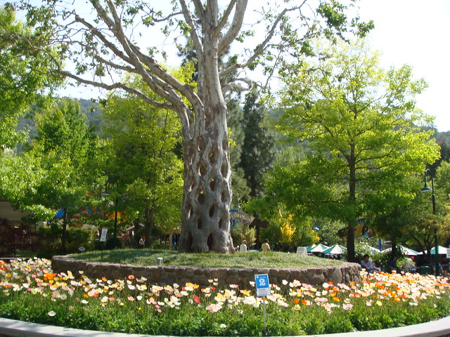 Circus tree at gilroy gardens explore milst1 39 s photos on for Gilroy garden trees