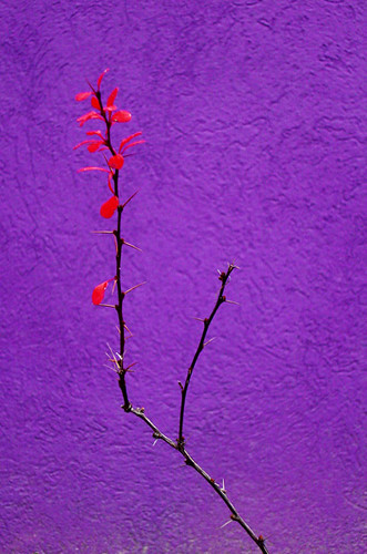 Purple orange a gallery on flickr for Orange and purple walls
