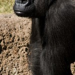Los Angeles Zoo 092