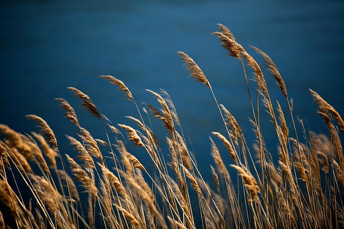 usa water de wheat delaware