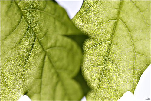 summer macro green canon leaf nb 100mm 7d usm dslr woodstock 2011 cans2s bmca
