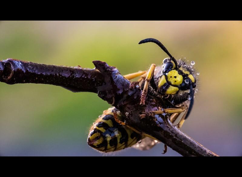 Le mie macro ( con Sigma 105 f/2.8 ) : insetti e non solo ... 13068102225_f12651fa5f_c
