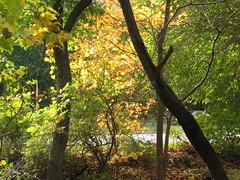 Pennypack Park foliage