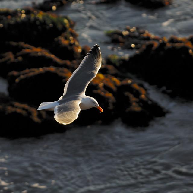 water on the beak...