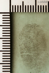 Cool Mint Fingerprint