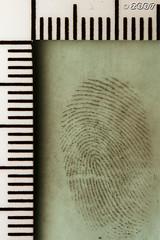 Cool Mint Fingerprint