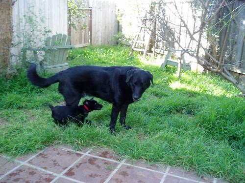 jake and maisie