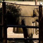 Los Angeles Zoo 067