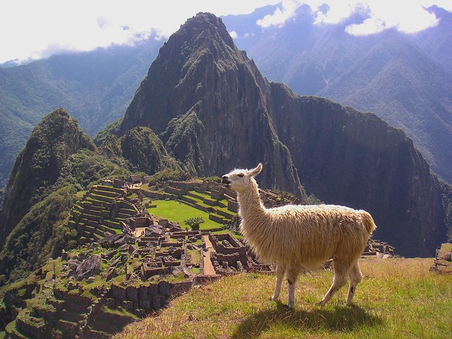 Photo:Lamas at Machu Pichu By:NeilsPhotography