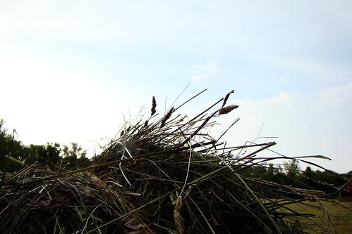 blue sky field farm hay bale redbarn haybale easttennessee roundbale kingstontn