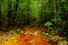 Starrs Creek Rainforest Reserve 27.1.2008