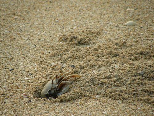 Crab on Koh Yao Noi