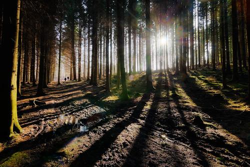 winter sun tree backlight forest skåne track shadows mud sweden earth forestry walk fir hdr photomatix nikond200 tokinaatx124 atx124 romeleåsen höstsalong ginordic1 kyrka2012