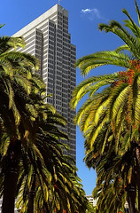 "San Francisco - Financial District ""Embarcadero Street Palm Trees"""