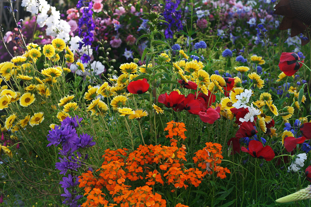 Annie\'s Annuals and Perennials - Retail and Online Nursery, Buy ...