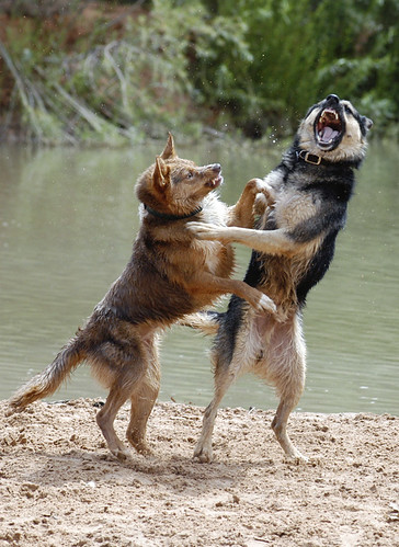 beach dogs water utah nikon play action kanab k9 bestofshow photoschmuck photobytroysnow