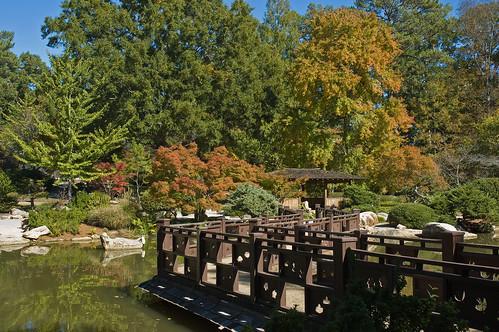 autumn trees reflection garden japanese birmingham alabama ginkgobiloba botanicalgardens
