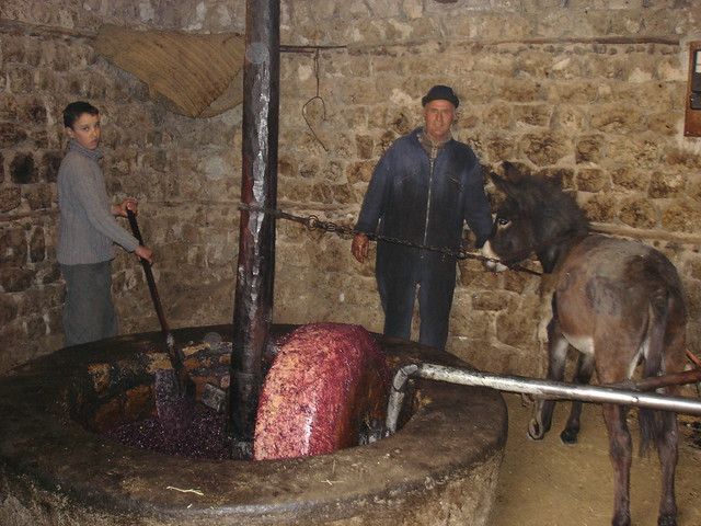 Olive press in Ah Frah: crushing olives in a most traditional way!  معصرة زيتون ببني فرح