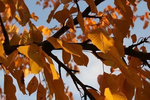 colori d'autunno: un po' di nero... by Sonia Squilloni