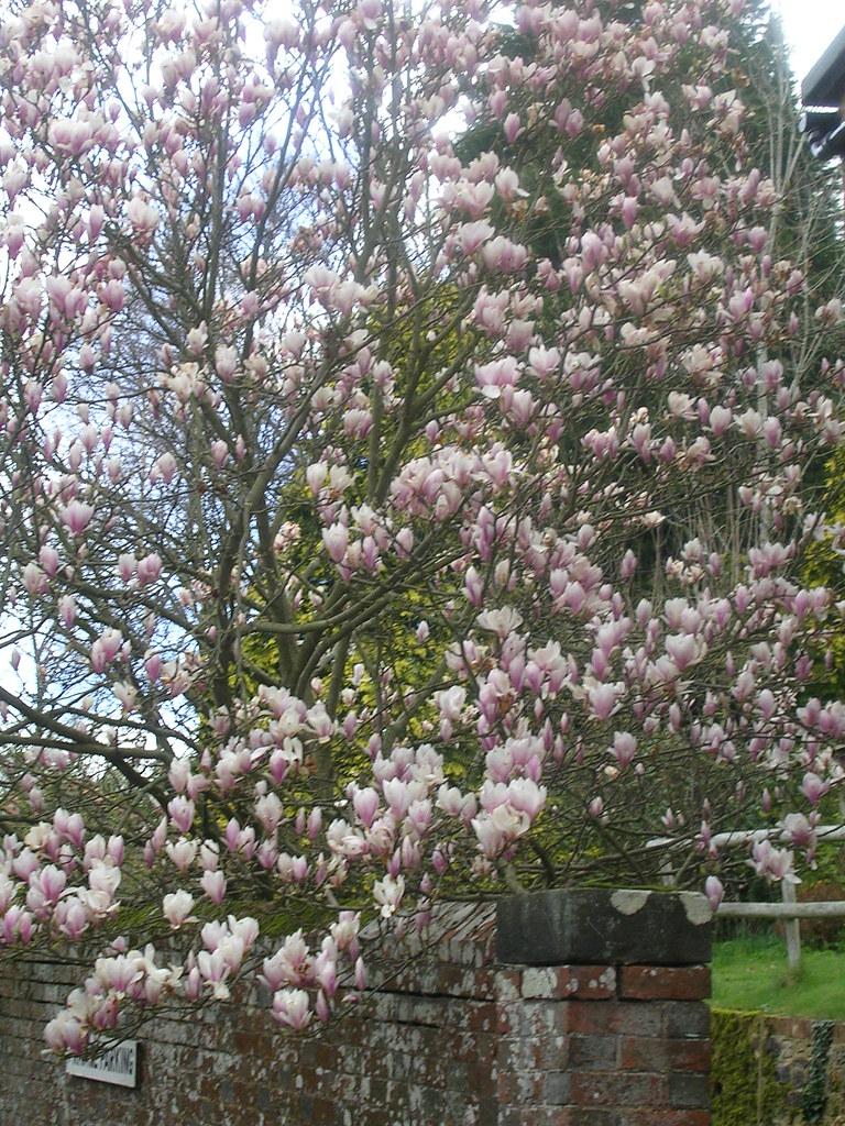 Magnolia Fittleworth Amberley to Pulborough