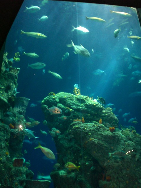 Aquarium deals in Charleston, WV: 50 to 90% off deals in Charleston. 15 Minutes of Virtual Reality Experience For One, Two, or Four at Lefant VR Spot (Up to 50% Off). Scavenger Hunt Walking Adventure for Two, Four or Six from Operation City Quest (Up to 52% Off).
