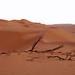 Small photo of Omani desert copy