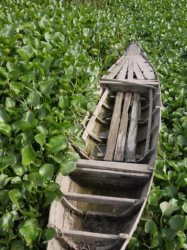 Row Boat in the Weeds [Mekong Delta, Vietnam]