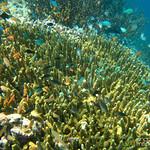 Schools of Fish at Coral - Menjangan Island, Indonesia