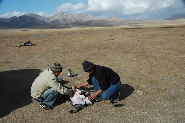 Goat Killed for Ramadan Feast - Song Kul Lake, Kyrgyzstan