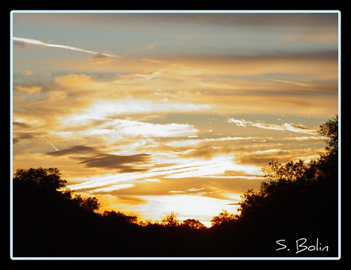 trees sunset sky nature clouds landscape florida