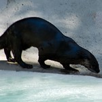 Los Angeles Zoo 006