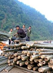 logging, wood, geology,