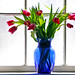 tulips in window