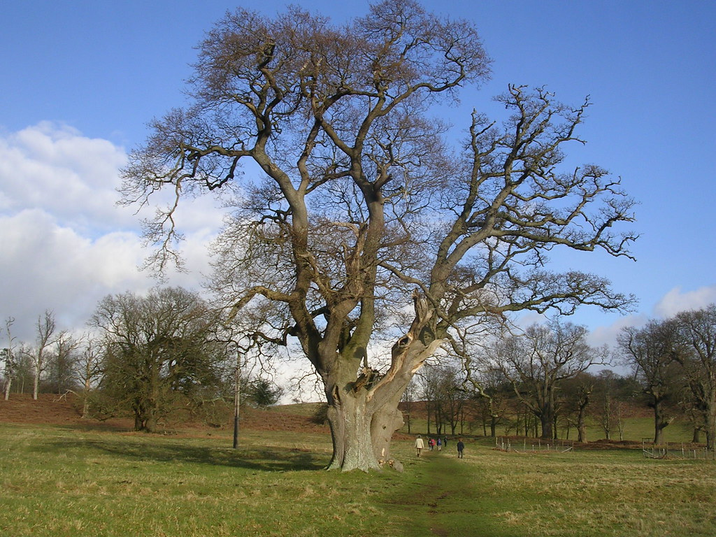 Tree Parham Park Pulborough Circular