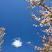 Spring In The Demo Garden