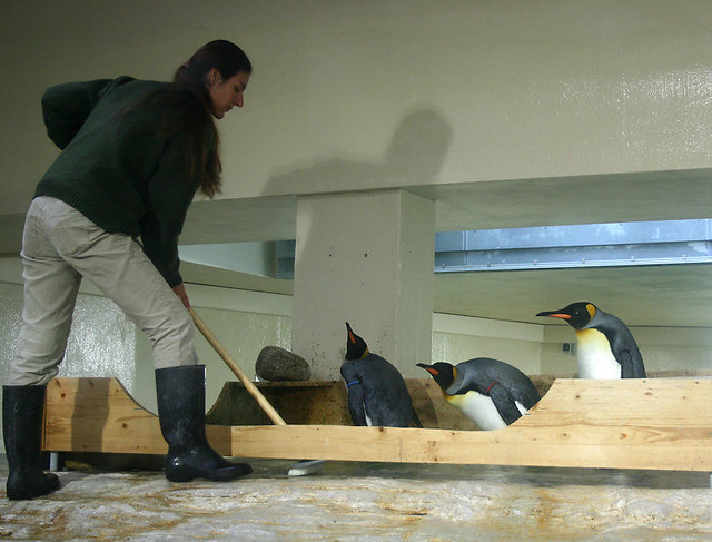 Cleaning the penguin habitat (Schonbrunn, Vienna)