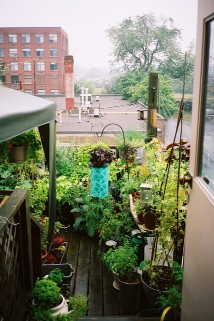 My Roof Garden - View from the Door