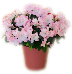 blossom(1.0), shrub(1.0), cut flowers(1.0), flower(1.0), artificial flower(1.0), plant(1.0), lilac(1.0), flower bouquet(1.0), floristry(1.0), pink(1.0), petal(1.0),