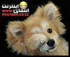 animal-miandeh-wordpress-com (1)